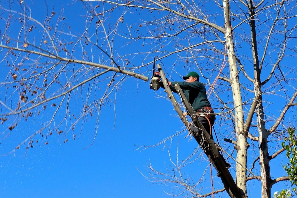 Contact Us-Miramar FL Tree Trimming and Stump Grinding Services-We Offer Tree Trimming Services, Tree Removal, Tree Pruning, Tree Cutting, Residential and Commercial Tree Trimming Services, Storm Damage, Emergency Tree Removal, Land Clearing, Tree Companies, Tree Care Service, Stump Grinding, and we're the Best Tree Trimming Company Near You Guaranteed!