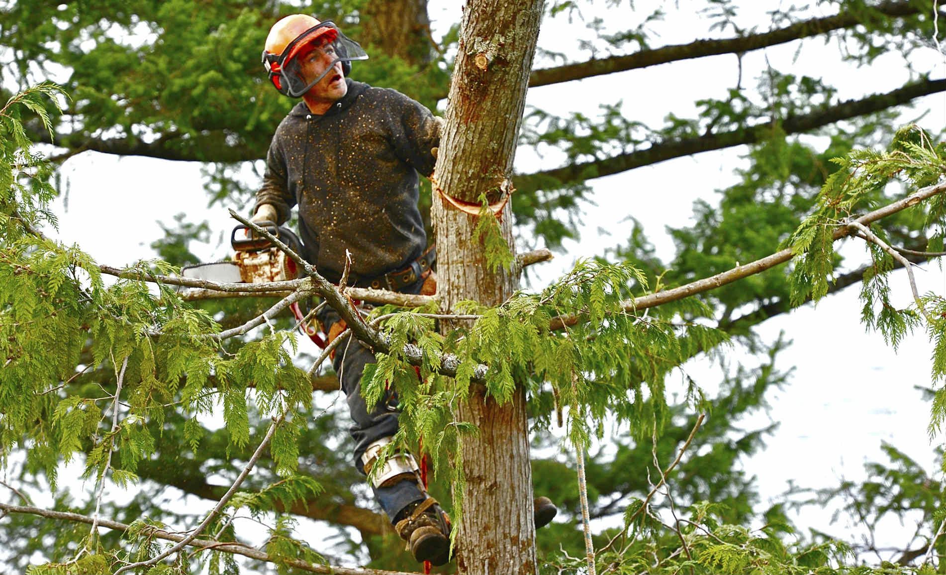Miramar FL Tree Trimming and Stump Grinding Services Home Page Image-We Offer Tree Trimming Services, Tree Removal, Tree Pruning, Tree Cutting, Residential and Commercial Tree Trimming Services, Storm Damage, Emergency Tree Removal, Land Clearing, Tree Companies, Tree Care Service, Stump Grinding, and we're the Best Tree Trimming Company Near You Guaranteed!