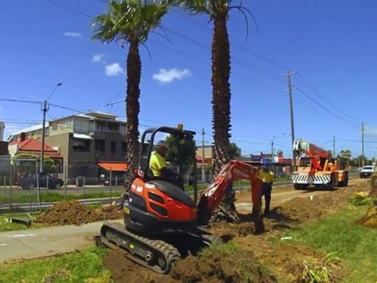 Palm Tree Removal-Miramar FL Tree Trimming and Stump Grinding Services-We Offer Tree Trimming Services, Tree Removal, Tree Pruning, Tree Cutting, Residential and Commercial Tree Trimming Services, Storm Damage, Emergency Tree Removal, Land Clearing, Tree Companies, Tree Care Service, Stump Grinding, and we're the Best Tree Trimming Company Near You Guaranteed!