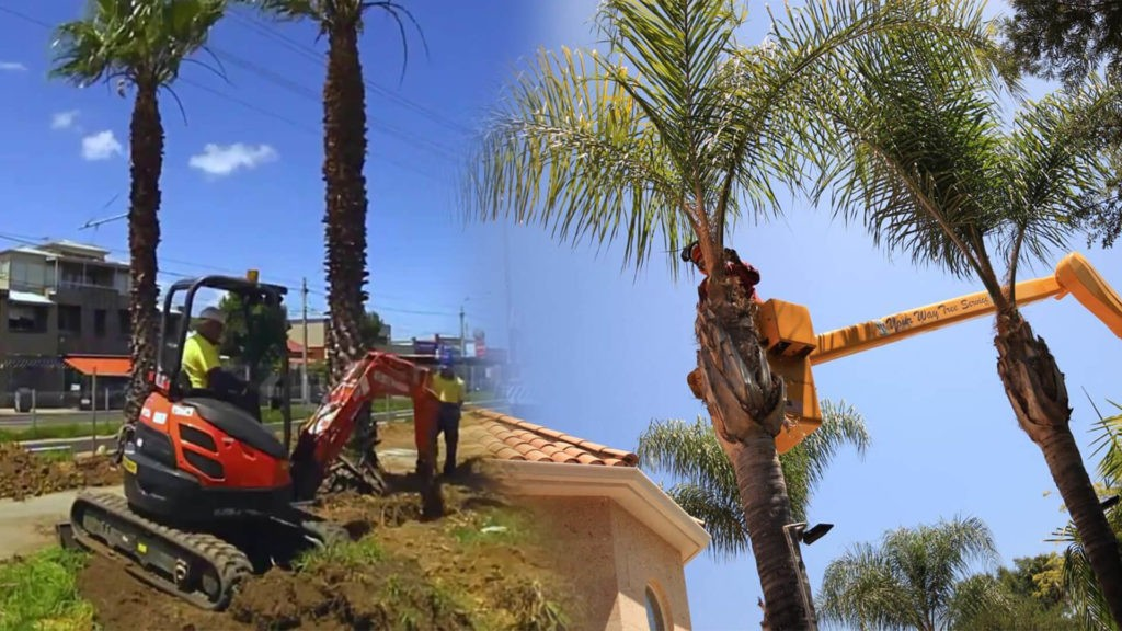 Palm tree trimming & palm tree removal-Miramar FL Tree Trimming and Stump Grinding Services-We Offer Tree Trimming Services, Tree Removal, Tree Pruning, Tree Cutting, Residential and Commercial Tree Trimming Services, Storm Damage, Emergency Tree Removal, Land Clearing, Tree Companies, Tree Care Service, Stump Grinding, and we're the Best Tree Trimming Company Near You Guaranteed!