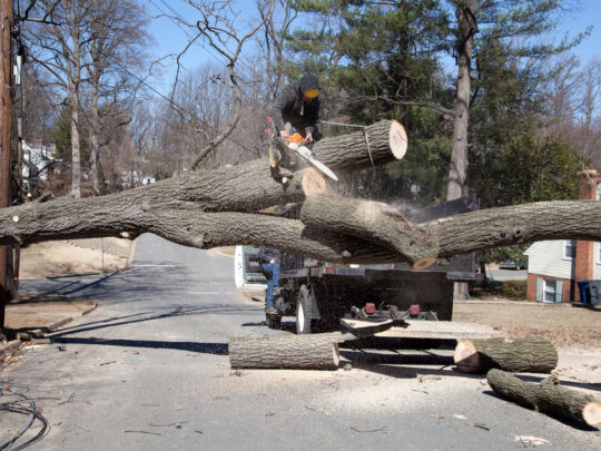 Residential Tree Services-Miramar FL Tree Trimming and Stump Grinding Services-We Offer Tree Trimming Services, Tree Removal, Tree Pruning, Tree Cutting, Residential and Commercial Tree Trimming Services, Storm Damage, Emergency Tree Removal, Land Clearing, Tree Companies, Tree Care Service, Stump Grinding, and we're the Best Tree Trimming Company Near You Guaranteed!