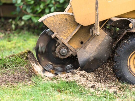 Stump Grinding-Miramar FL Tree Trimming and Stump Grinding Services-We Offer Tree Trimming Services, Tree Removal, Tree Pruning, Tree Cutting, Residential and Commercial Tree Trimming Services, Storm Damage, Emergency Tree Removal, Land Clearing, Tree Companies, Tree Care Service, Stump Grinding, and we're the Best Tree Trimming Company Near You Guaranteed!