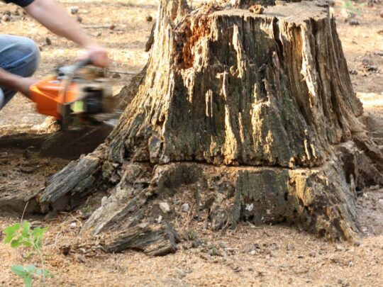 Stump Removal-Miramar FL Tree Trimming and Stump Grinding Services-We Offer Tree Trimming Services, Tree Removal, Tree Pruning, Tree Cutting, Residential and Commercial Tree Trimming Services, Storm Damage, Emergency Tree Removal, Land Clearing, Tree Companies, Tree Care Service, Stump Grinding, and we're the Best Tree Trimming Company Near You Guaranteed!