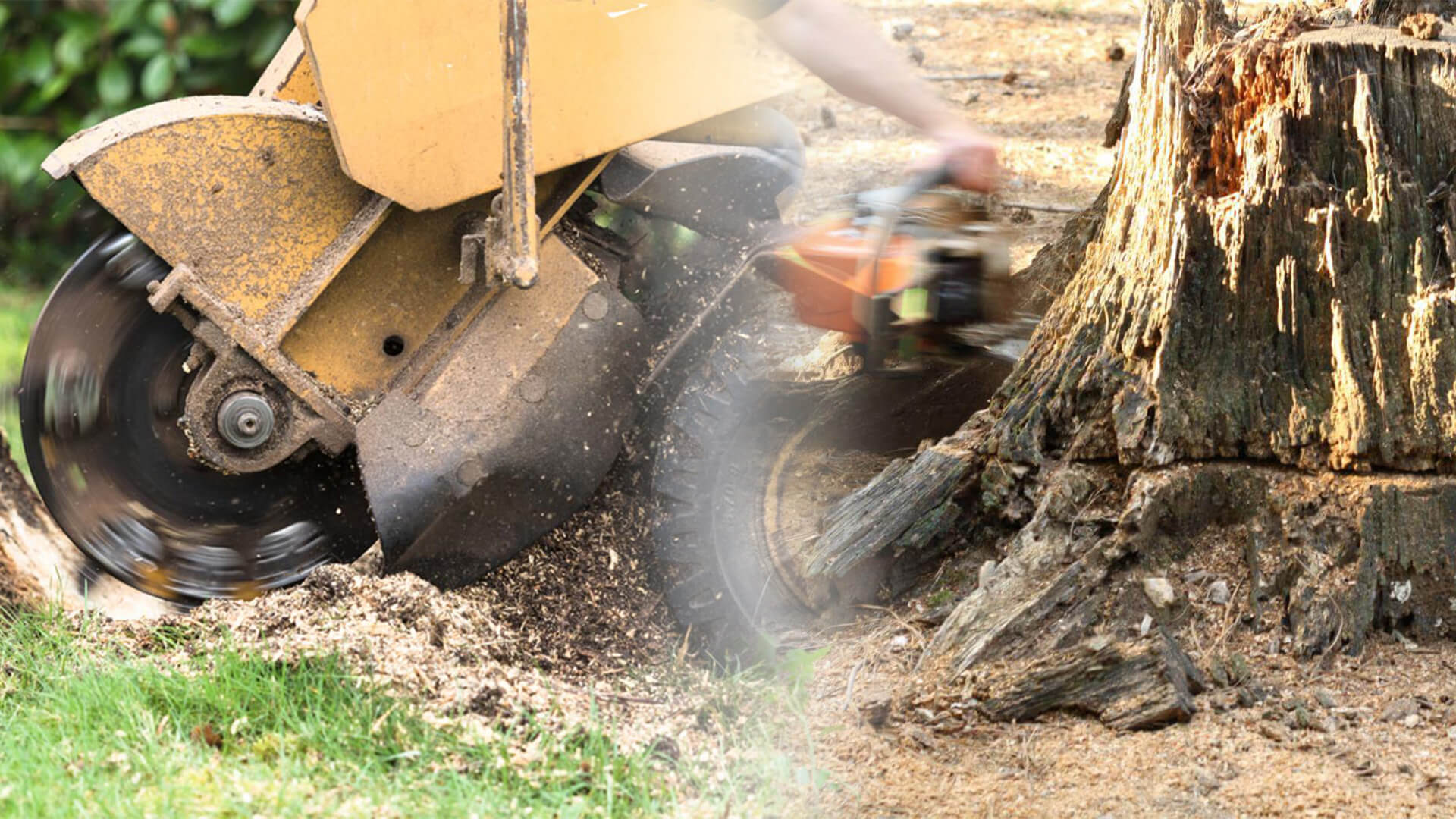 Stump grinding & removal-Miramar FL Tree Trimming and Stump Grinding Services-We Offer Tree Trimming Services, Tree Removal, Tree Pruning, Tree Cutting, Residential and Commercial Tree Trimming Services, Storm Damage, Emergency Tree Removal, Land Clearing, Tree Companies, Tree Care Service, Stump Grinding, and we're the Best Tree Trimming Company Near You Guaranteed!