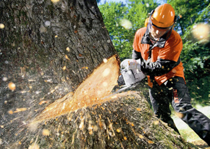 Tree Cutting-Miramar FL Tree Trimming and Stump Grinding Services-We Offer Tree Trimming Services, Tree Removal, Tree Pruning, Tree Cutting, Residential and Commercial Tree Trimming Services, Storm Damage, Emergency Tree Removal, Land Clearing, Tree Companies, Tree Care Service, Stump Grinding, and we're the Best Tree Trimming Company Near You Guaranteed!