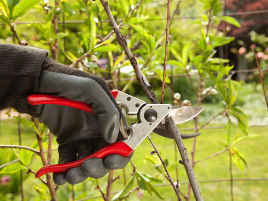 Tree Pruning-Miramar FL Tree Trimming and Stump Grinding Services-We Offer Tree Trimming Services, Tree Removal, Tree Pruning, Tree Cutting, Residential and Commercial Tree Trimming Services, Storm Damage, Emergency Tree Removal, Land Clearing, Tree Companies, Tree Care Service, Stump Grinding, and we're the Best Tree Trimming Company Near You Guaranteed!