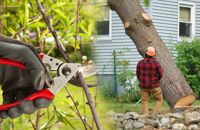 Tree pruning & tree removal-Miramar FL Tree Trimming and Stump Grinding Services-We Offer Tree Trimming Services, Tree Removal, Tree Pruning, Tree Cutting, Residential and Commercial Tree Trimming Services, Storm Damage, Emergency Tree Removal, Land Clearing, Tree Companies, Tree Care Service, Stump Grinding, and we're the Best Tree Trimming Company Near You Guaranteed!